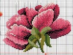 Roses de printemps.