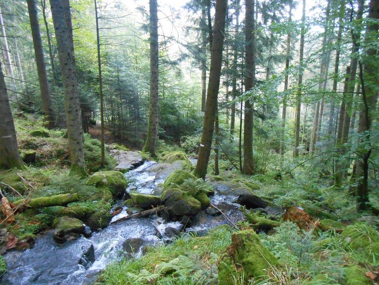 Vosges-la tourbière de machais/les cascades de Stolz Ablass