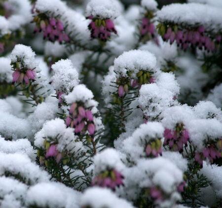 La_neige_095