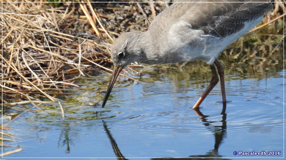 Réserve ornitho du Teich - Septembre 2016 - 4/11