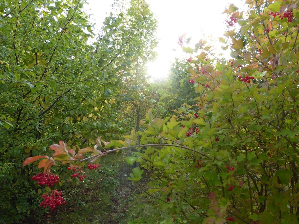 Balade d'automne, ce dimanche 20 octobre.