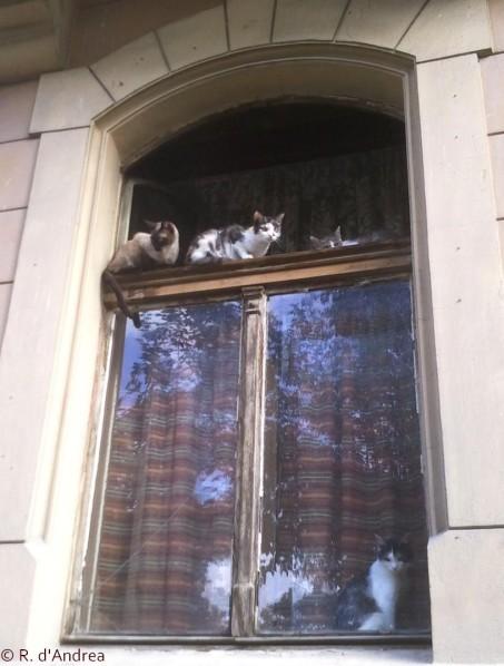 Chats de Roumanie