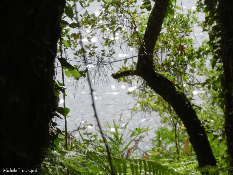 Une balade à MOLIETS (40), le 24 mai, entre Océan et Etang (suite n° 2 et fin)....