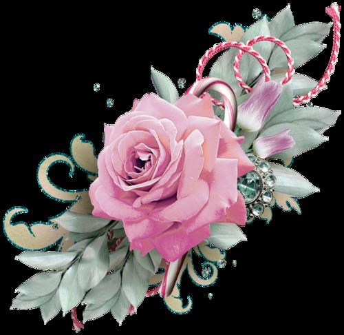 5 images de roses