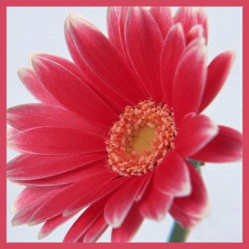 Une fleur de soutien