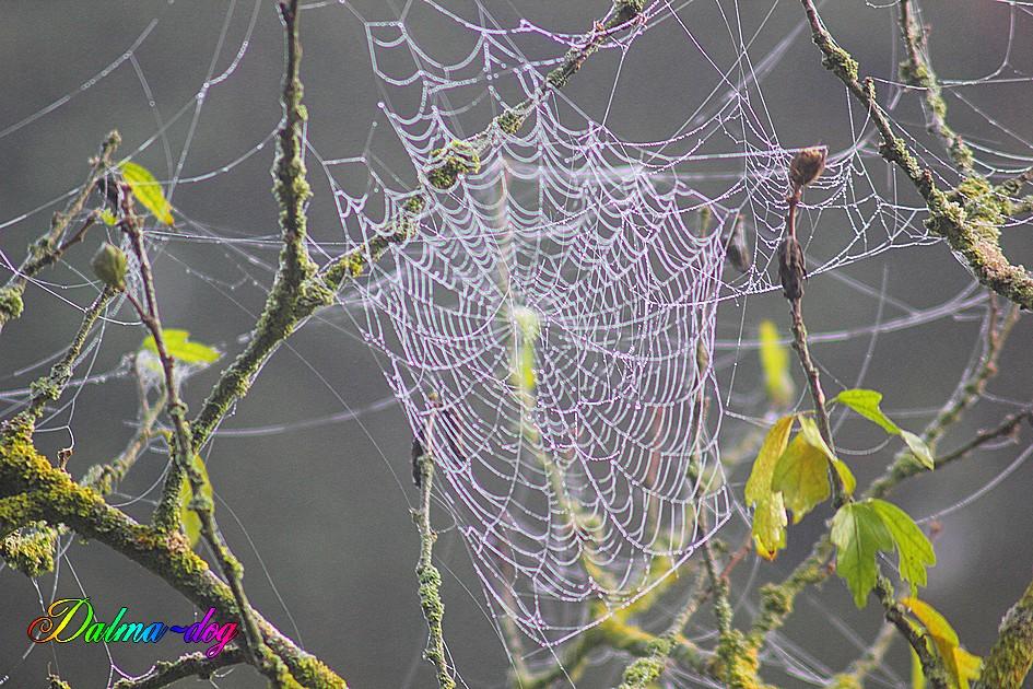 toilles d'araignée