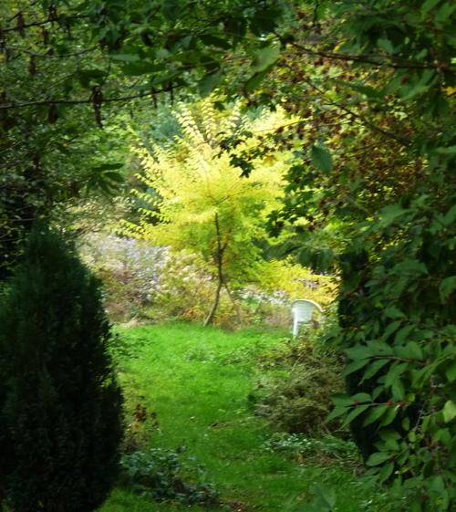 l'automne au jardin de l'abbaye