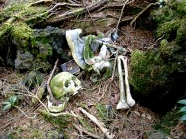 Aokigahara, la forêt maudite - Malédictions