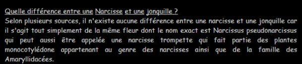 **    LA JOURNEE DES JONQUILLES/NARCICES**