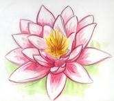 http://lesourirevientdespieds.e-monsite.com/medias/images/fleur-de-lotus-1.jpg