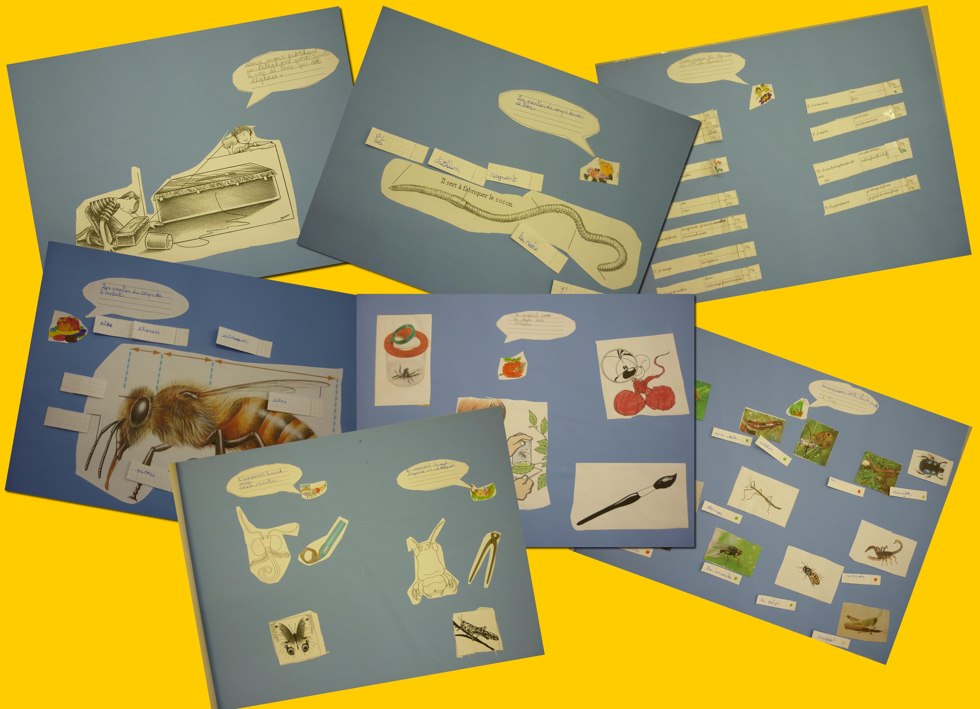 insectes presentation