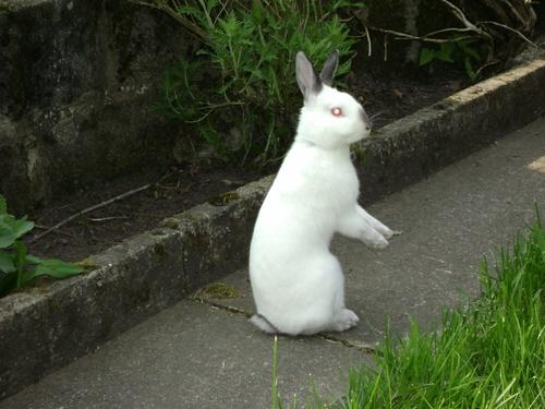 suite de la vie de lapinou