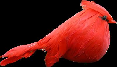 Oiseaux de noël 1
