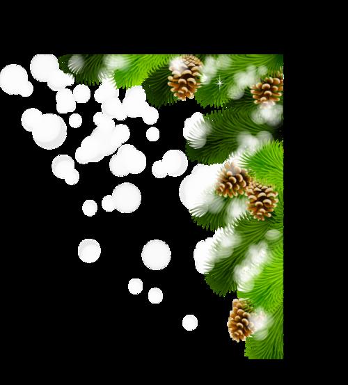 Branche de sapin / 2