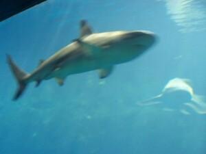 aquarium_lyon-2012-04.jpg