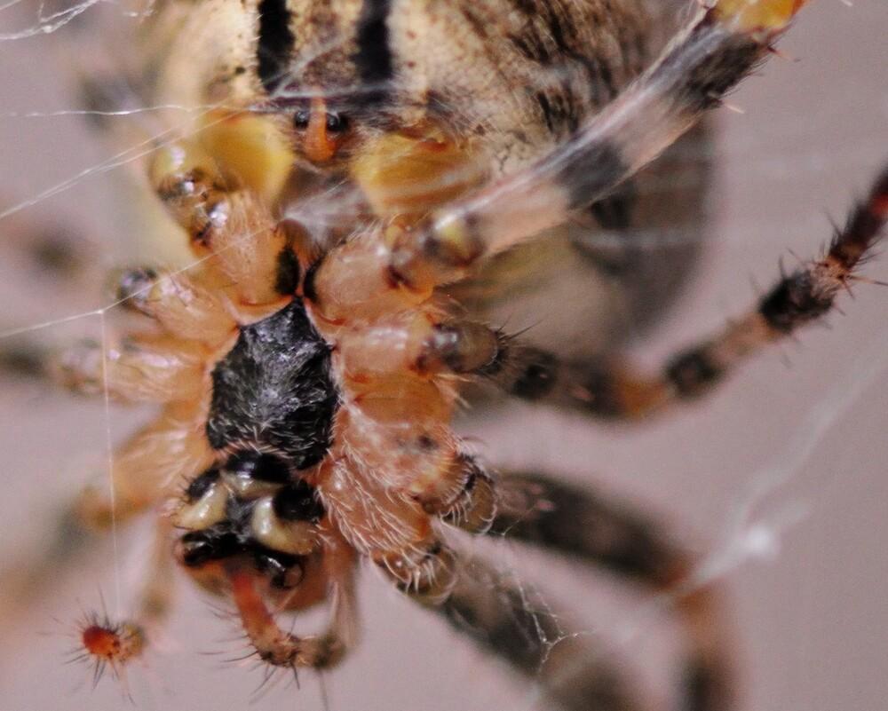 Les dessous de Dame Araignée