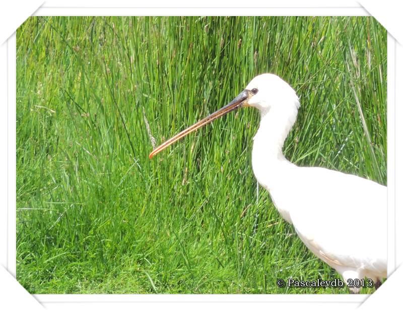 Symphonie printanière à la réserve ornithologique du Teich - 16/20