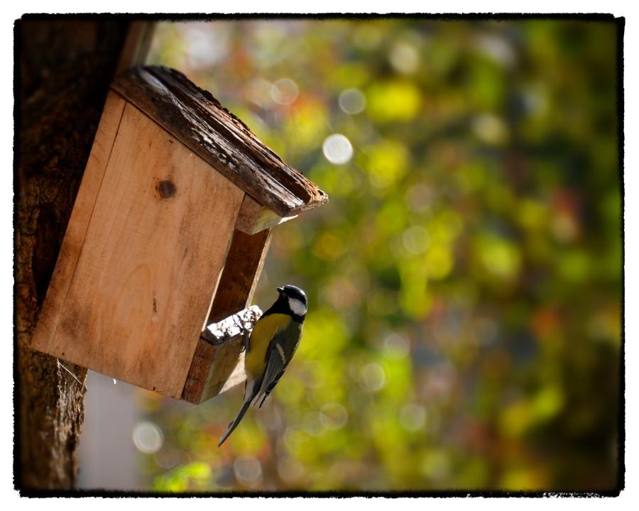 Le repas festif des petits oiseaux.....