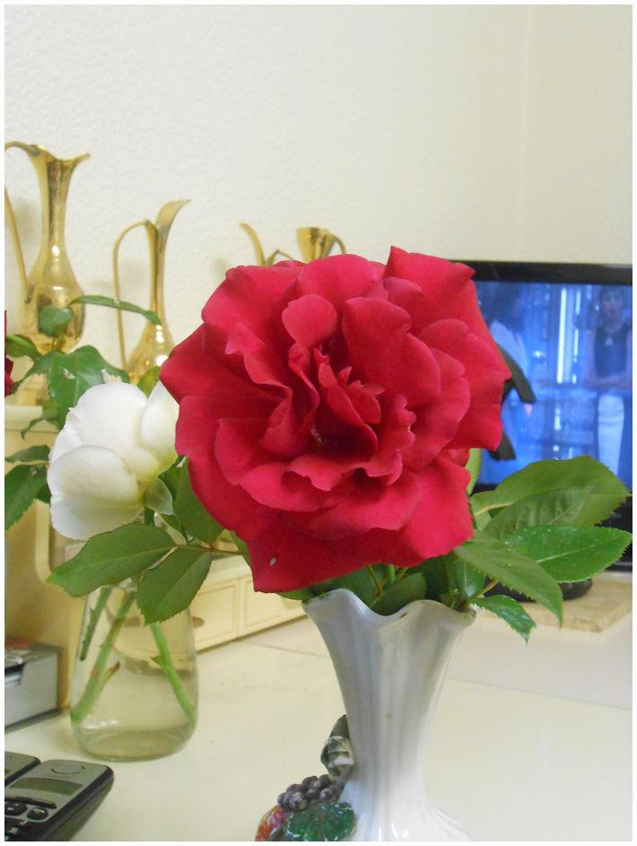 des roses pour ma femme