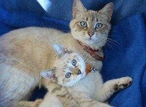 Chaton, Chatte, Chaton Avec Maman
