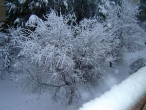 Il neige sur Avignon1