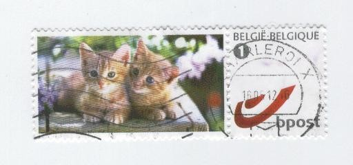 chats-copie-1.jpg