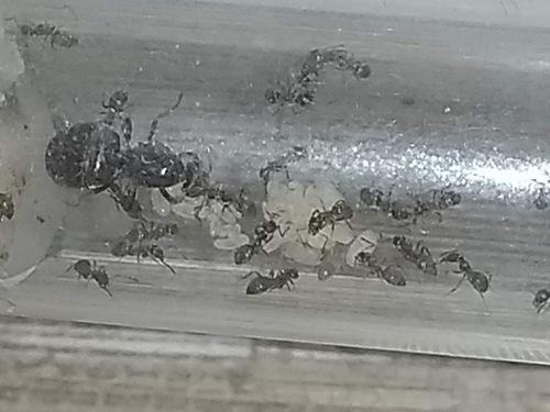 Nouvelle des fourmis