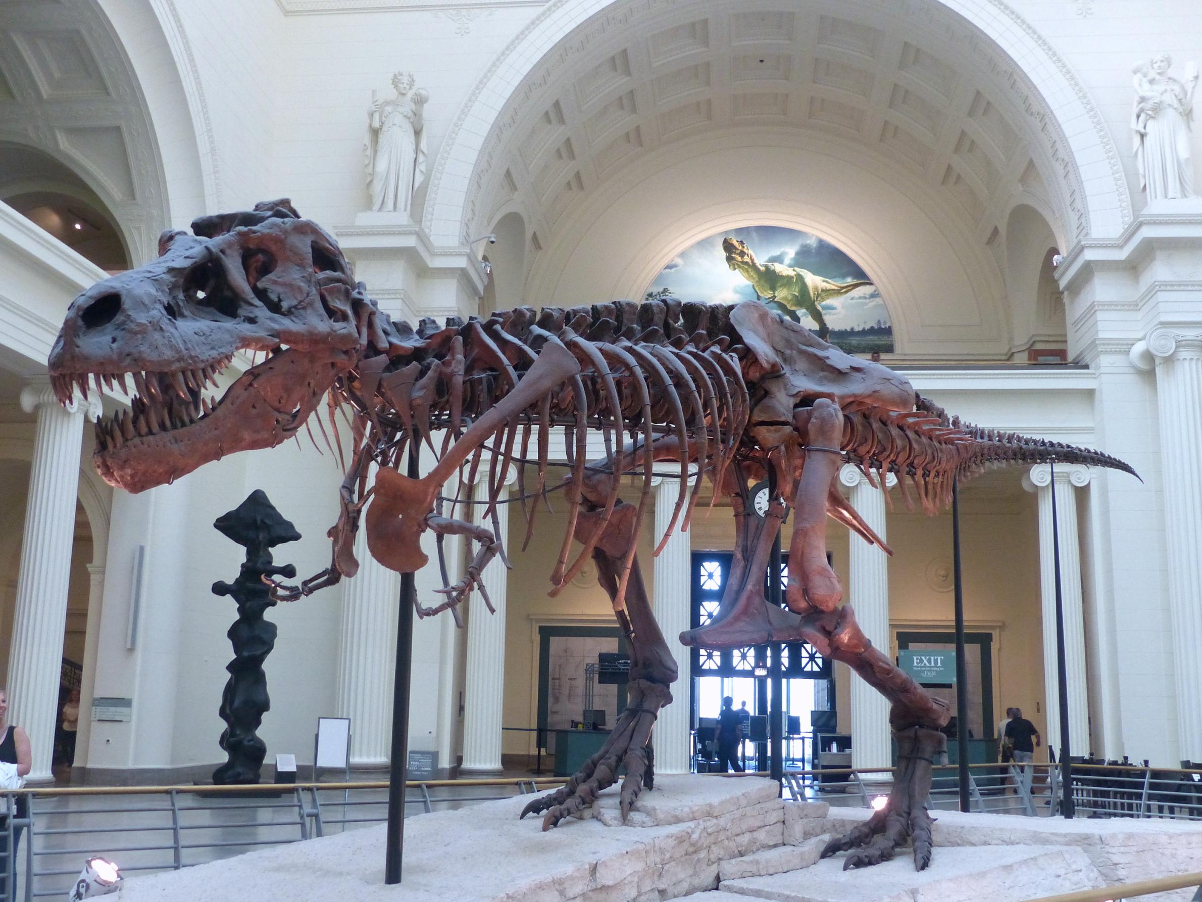 T Rex Sue