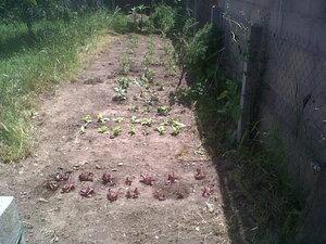 Le potager, derrière la maison