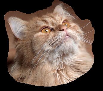 Tubes chats - série 02 Visages de chats