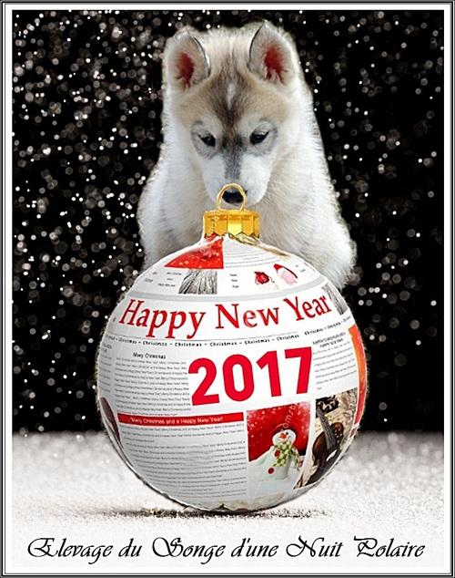 Bonne année (1er janvier 2017)