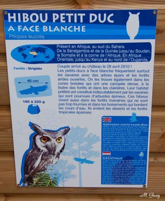 hibou-explications-2538.jpg