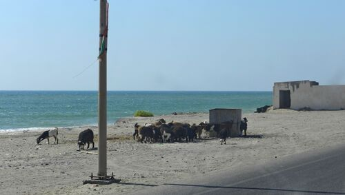 Oman mars 15 (6ème partie)