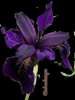 Virágok.7.