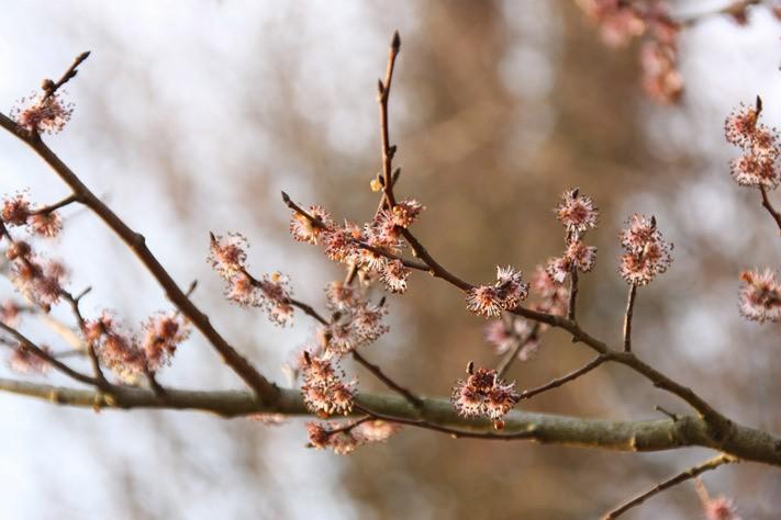 arbre-en-fleurs-01