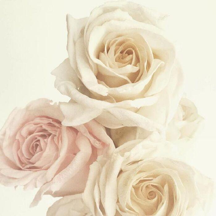 Les Fleurs de Sucre de .............Maggie Austin
