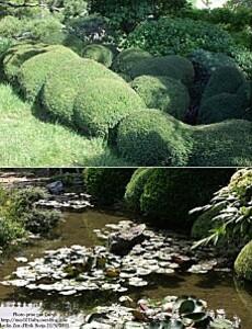 jardin zen 22