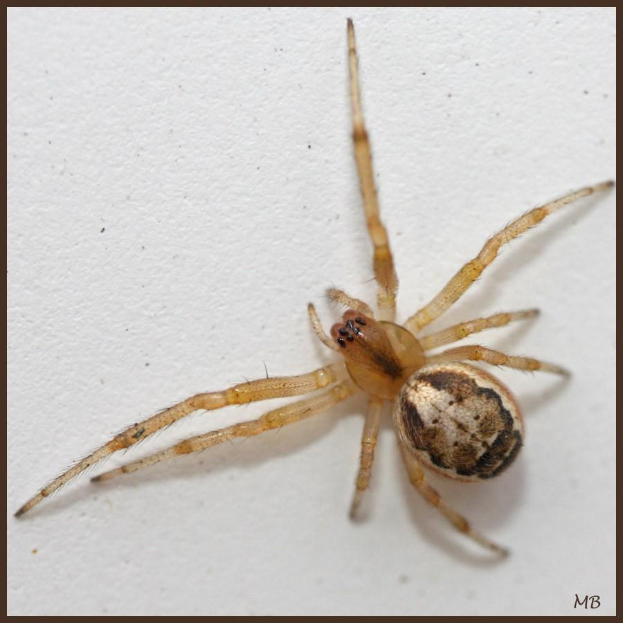 Arachnides-03-5591.jpg