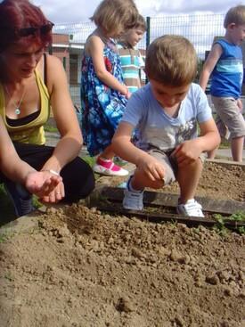 jardinage - semence