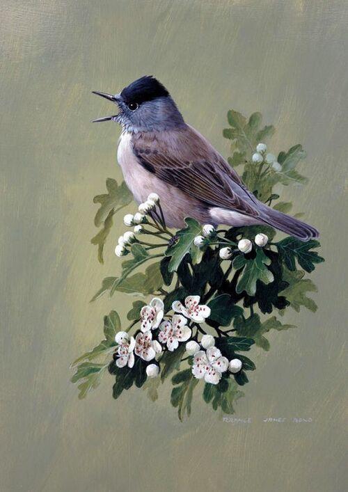 oiseaux en peinture