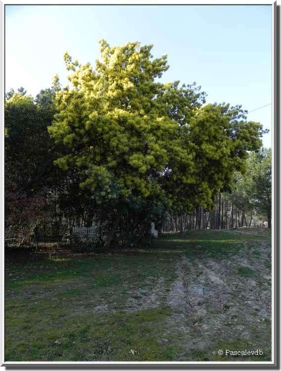 Le Moutchic - Etang de Lacanau