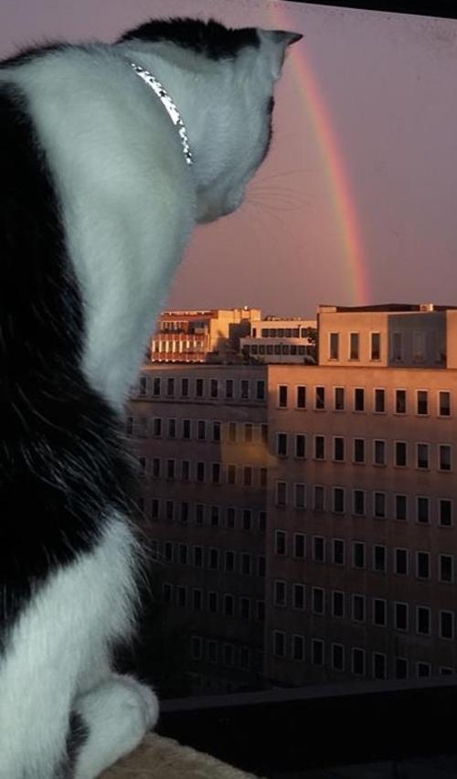 Wolu1200 : Quand un arc-en-ciel illumine le ciel bruxellois