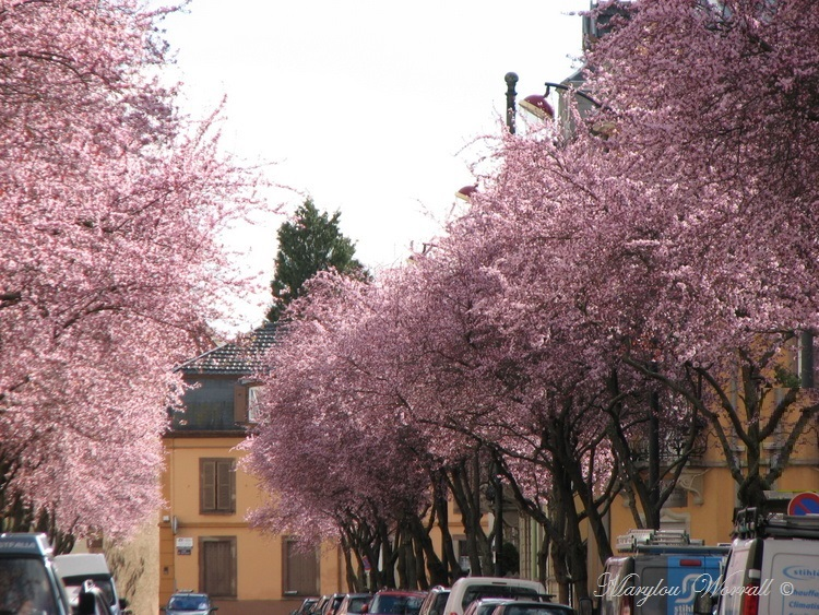C'est le printemps