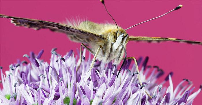 La Vie des Insectes et des Fleurs en Video Time-Lapse 8K