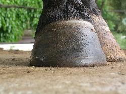 pieds nus 3 jours après le deferrage
