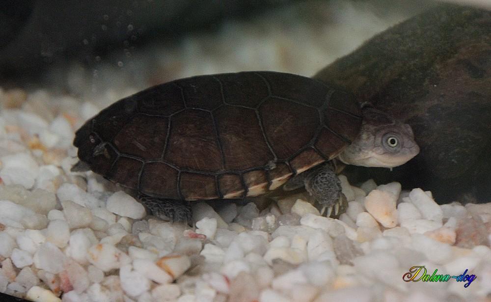 les tortue de ma fille