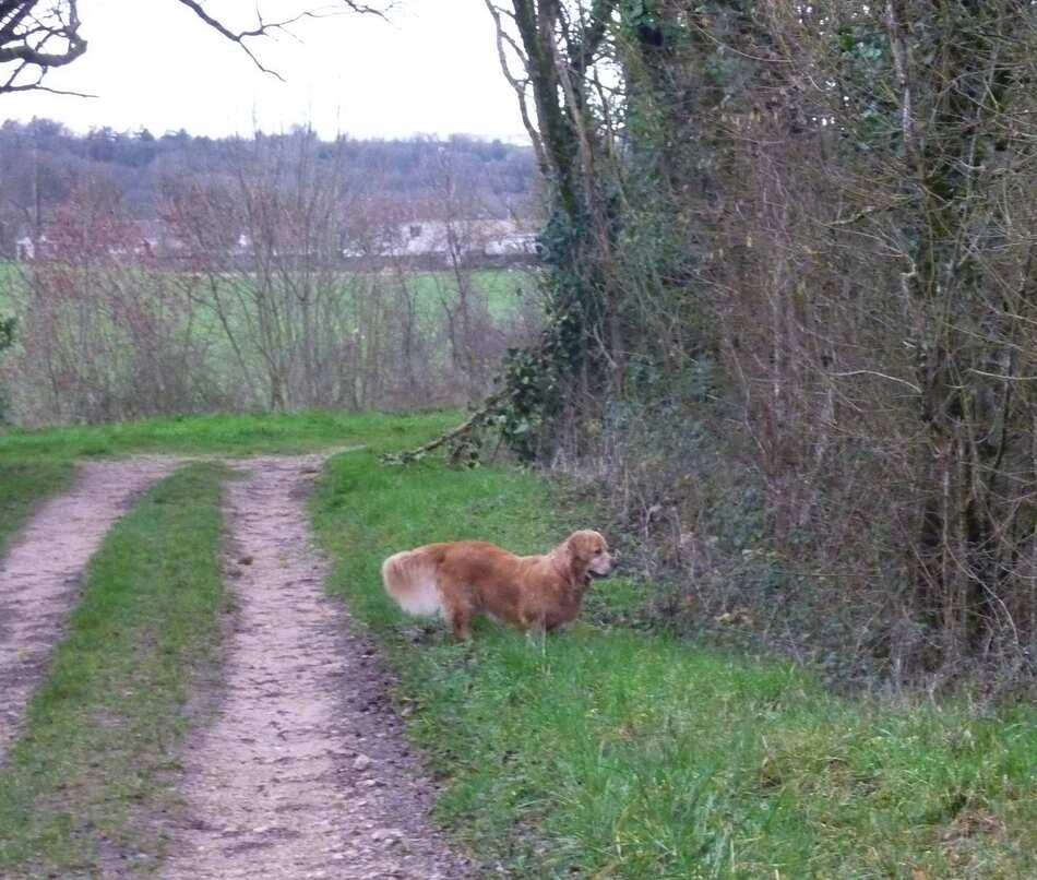 Promenade dans la campagne charentaise.