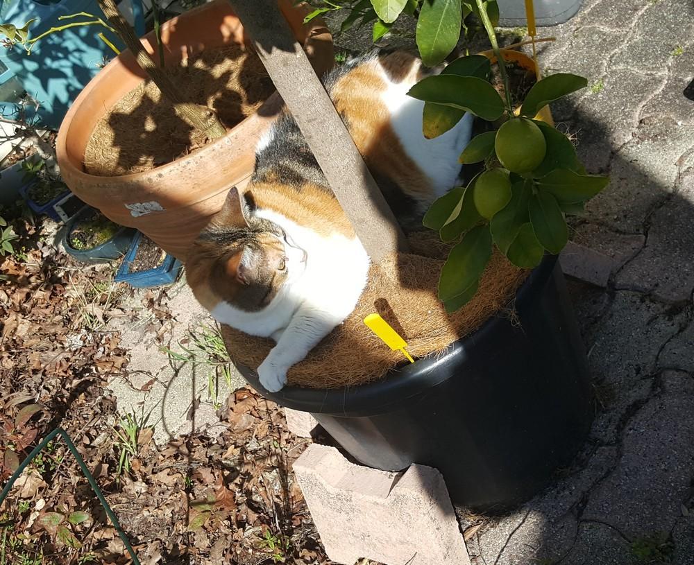 Ecureuille, gardienne de mon grand citronnier - Mars 2020