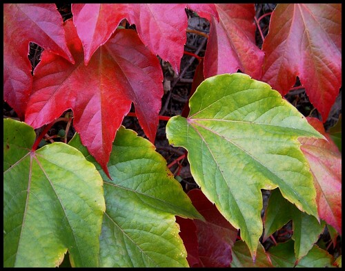 L'automne ...