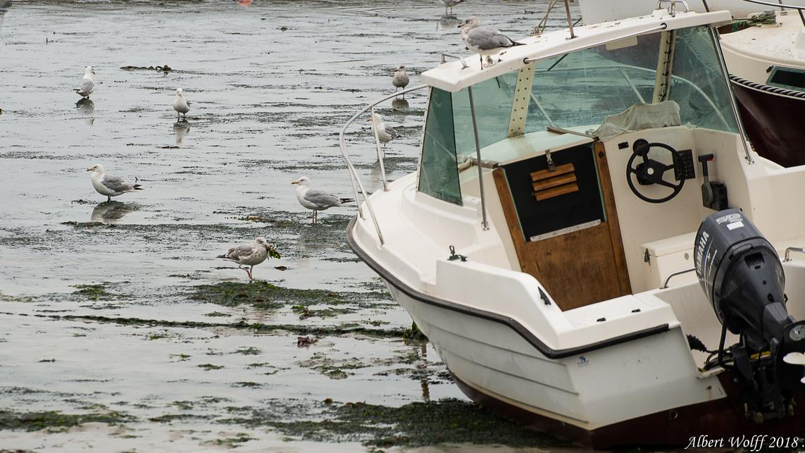 Plouescat - Des bateaux mais pas que (2)